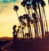 Лос Анджелис сменя палмите си