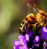 Какво се случва,ако ядем редовно мед