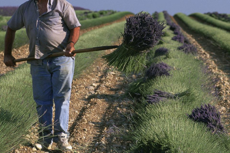 До 2000 лева глоба, ако излъжем преброителите на земеделски стопанства