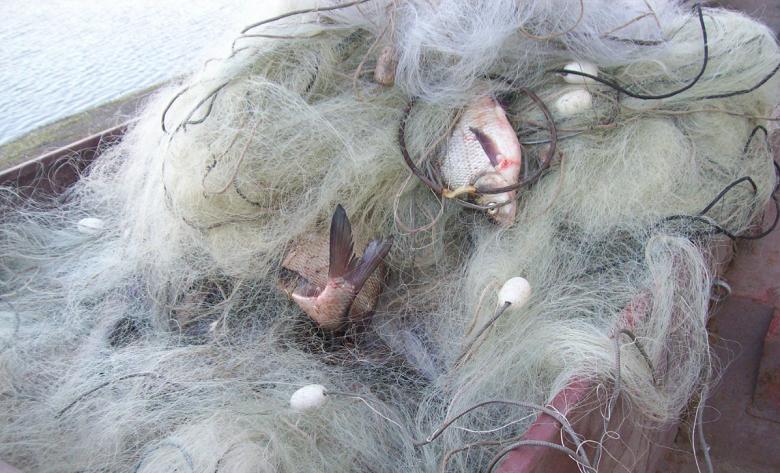 150 метра бракониерски мрежи с улов 20 кг сребриста каракуда извадиха от Шабленското езеро