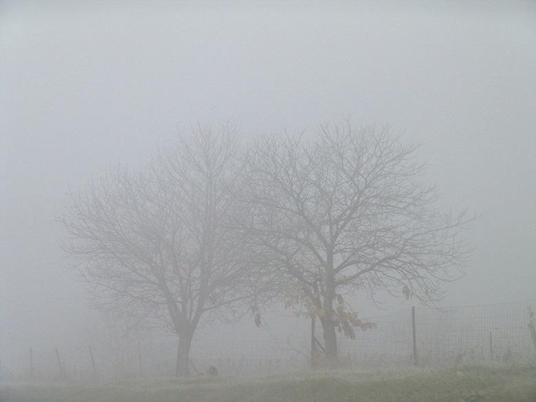 АПИ: При гъста мъгла най-важното за безопасността на движението е да се кара с ниска скорост и да се спазва дистанция