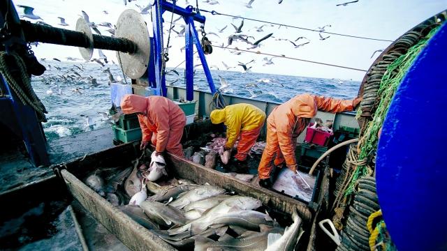 С нова наредба променят организацията на пазара на риба в България