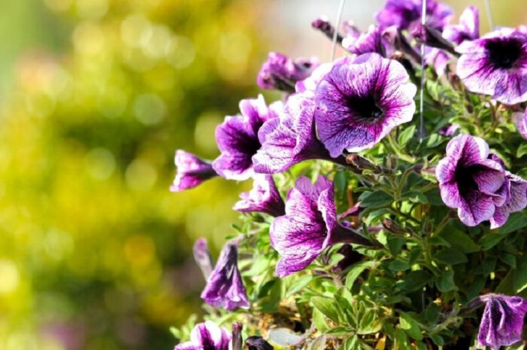 Топ 5 на най-добрите цветя за градината на балкона