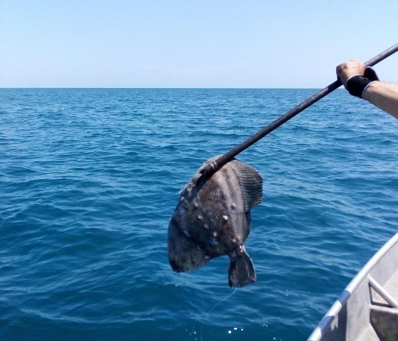 Приключи забраната за улов на калкан и любителски риболов над 500 метра надморска височина