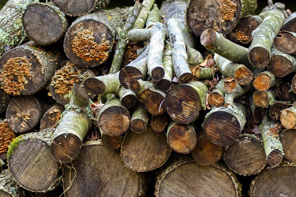 Близо 3 000 проверки са извършили през август в горските територии екипите на Североизточното държавно предприятие