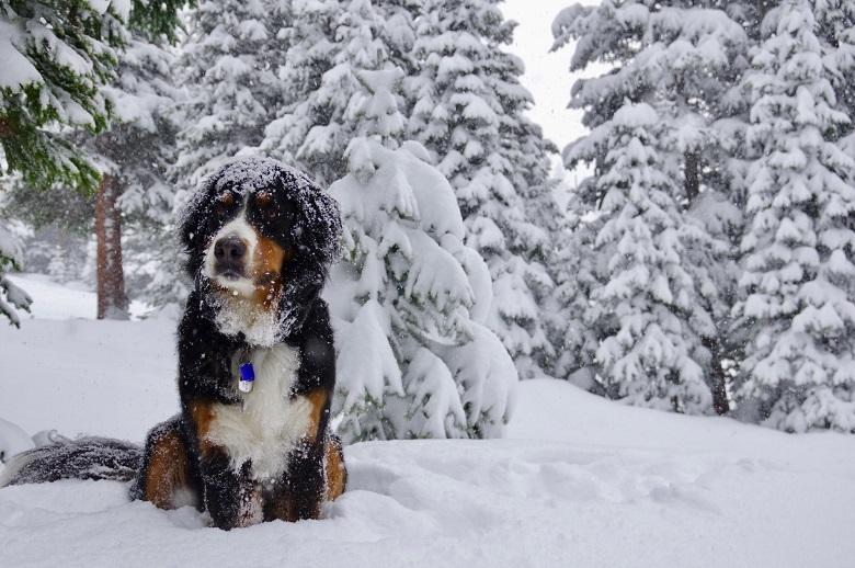 Посрещаме март с много сняг