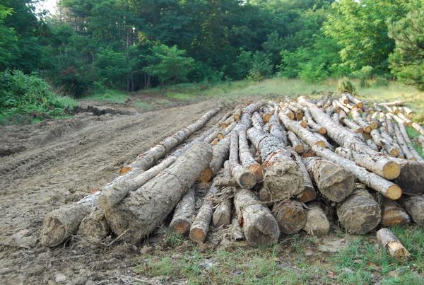 Горските стражари задържаха три каруци, натоварени с 5 кубика незаконна дървесина